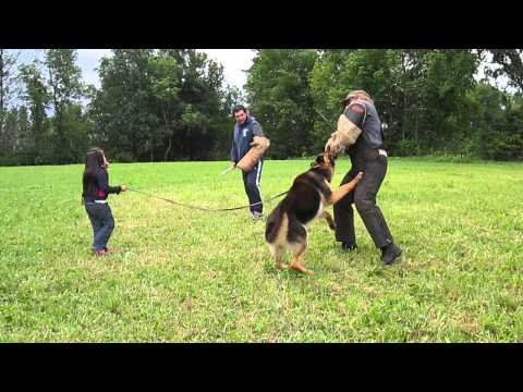 5 year old girl protected by her German Shepherd from 2 bad guys Pushpa Padayichie