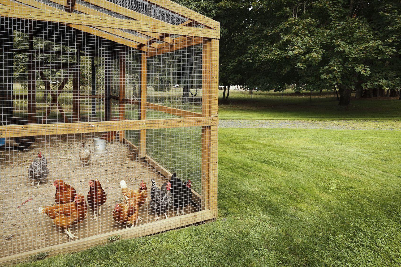 Special Chicken Run Ideas For Your Garden Decoration