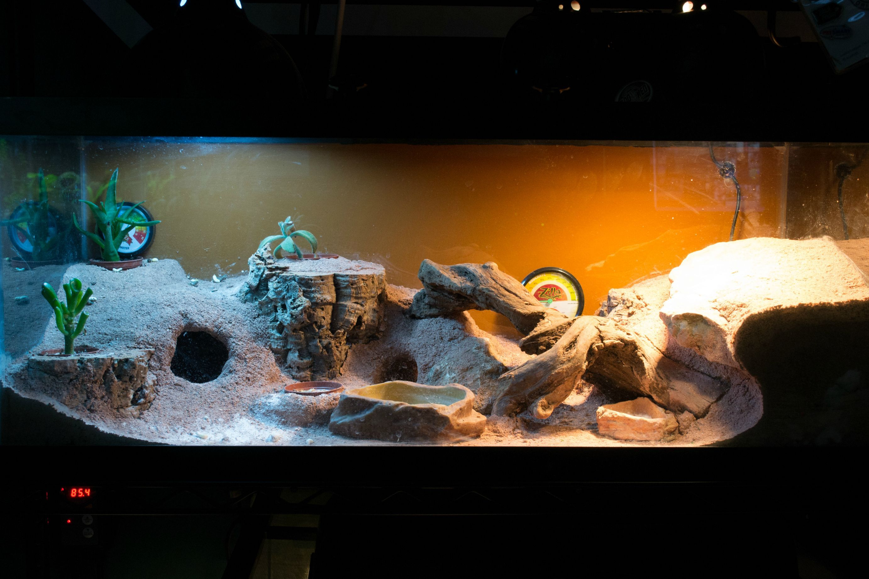 Wally S Home Lecters Stuff Leopard Gecko Terrarium
