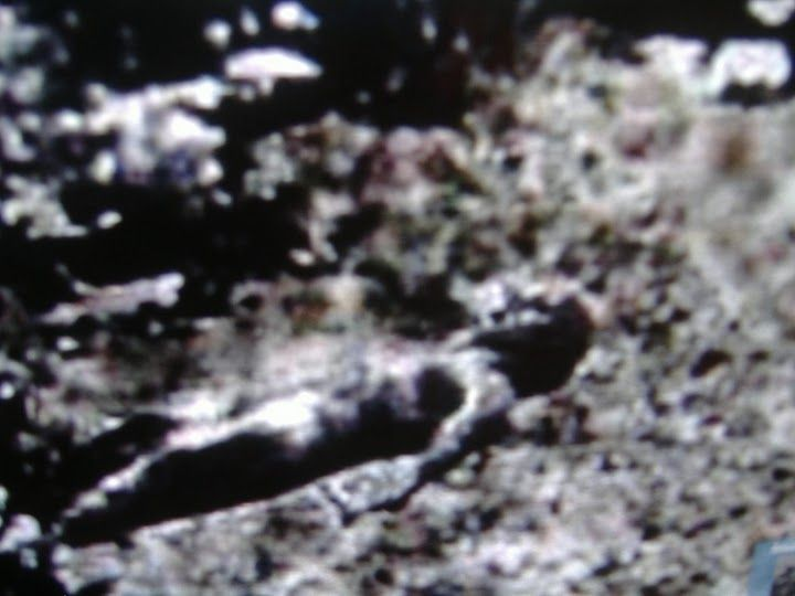 the roswell ufo crash General information about the international ufo museum & research center.