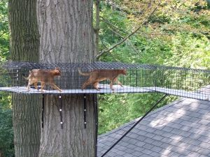 Wow Would The Kitties Live This Perch Cat Run Cat Catio