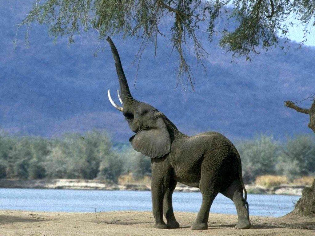 женщин картинки слоны хоботом вверх хотите узнать