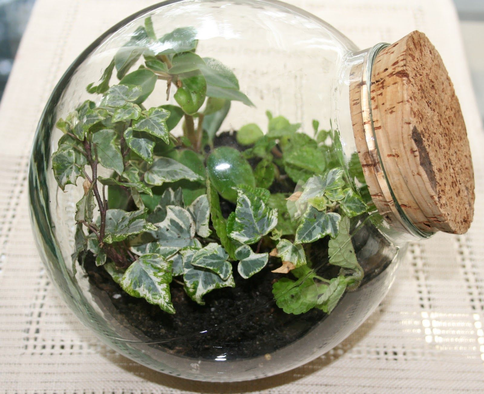 Small indoor plants in glass bowl and glass blown plants for Indoor gardening glasses