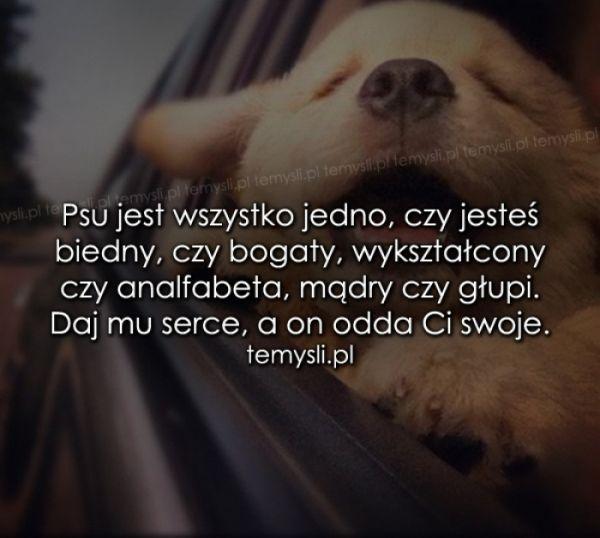 Psu Jest Wszystko Jedno Czy Jesteś Cytaty życiowe