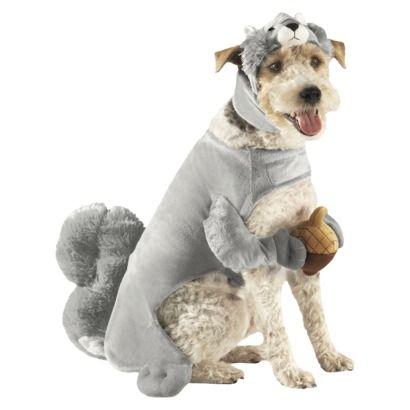 Squirrel Dog Costume - X-large  sc 1 st  Pinterest & Squirrel Dog Costume - X-large | For My Fur Babies | Pinterest | Pet ...