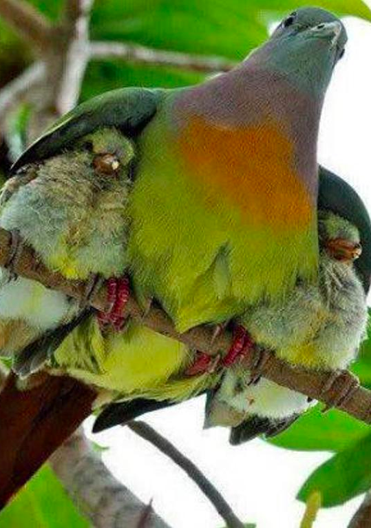 Mother's sheltering wings • photo: via Jan Stead on Redbubble
