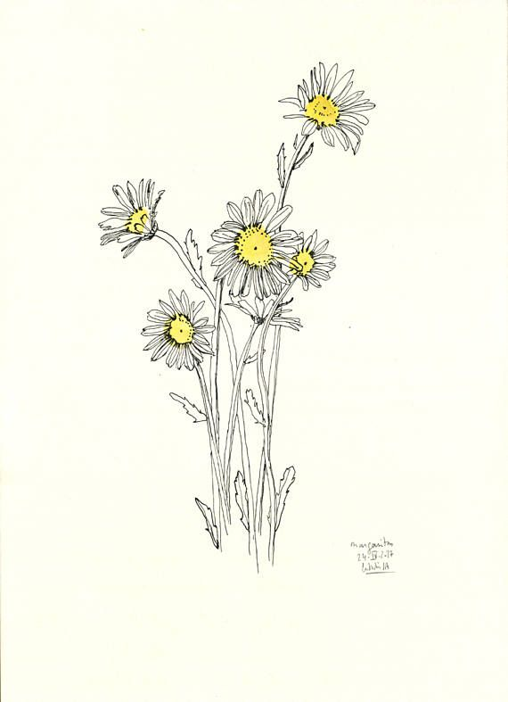 Daisies bouquet line drawing ink and yellow watercolour this is a daisies bouquet line drawing ink and yellow watercolour this is a print of my mightylinksfo