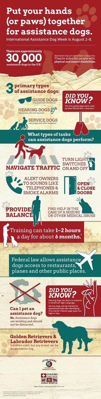 Happy International Assistant Dog Week!! 8/7/168/13/16