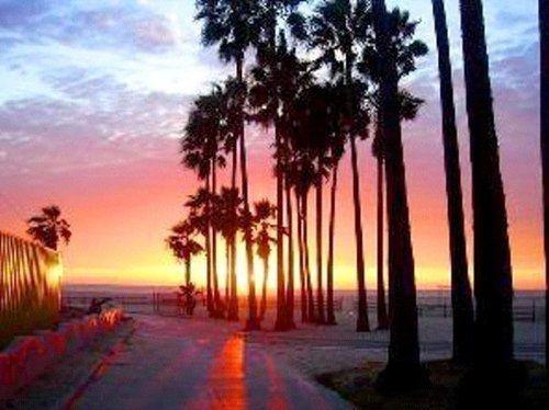Beach Sunset Palm Tree Tumblr