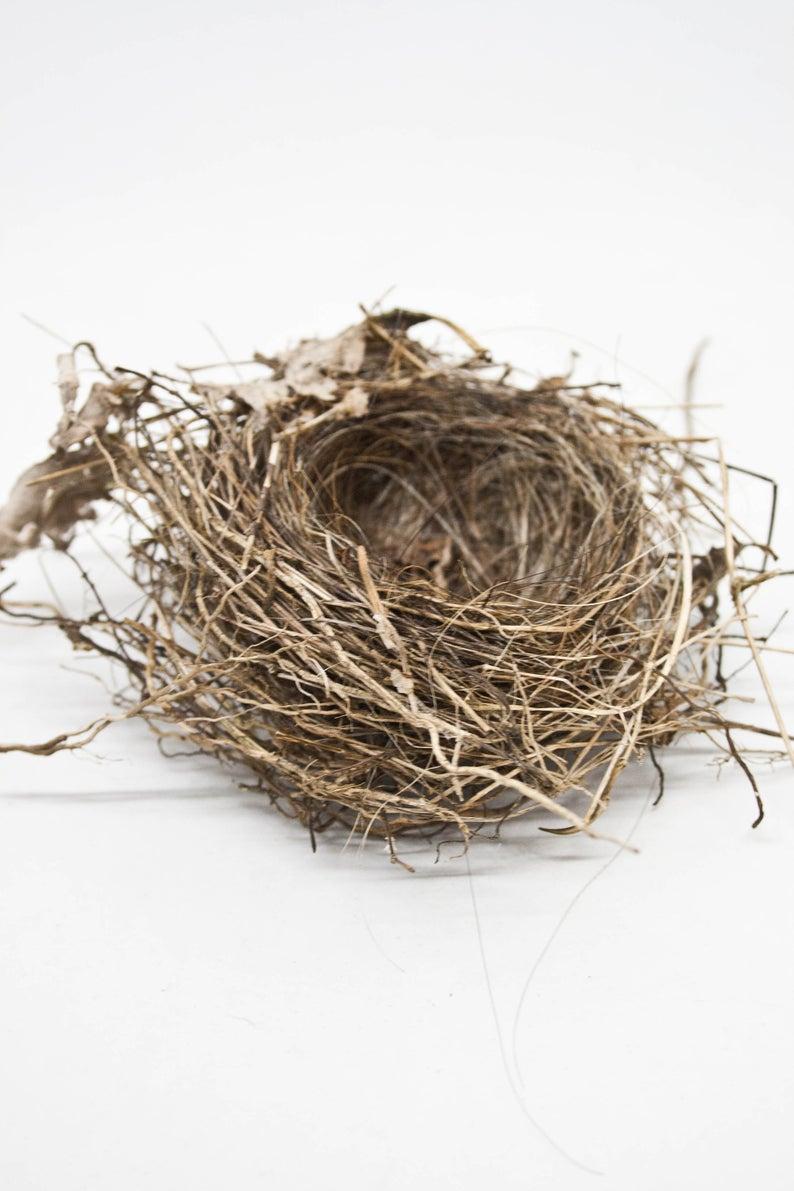 Real Bird Nest Small Abandoned Birdsnest Forest Finds Etsy Bird Nest Bird Nest Hair Nest