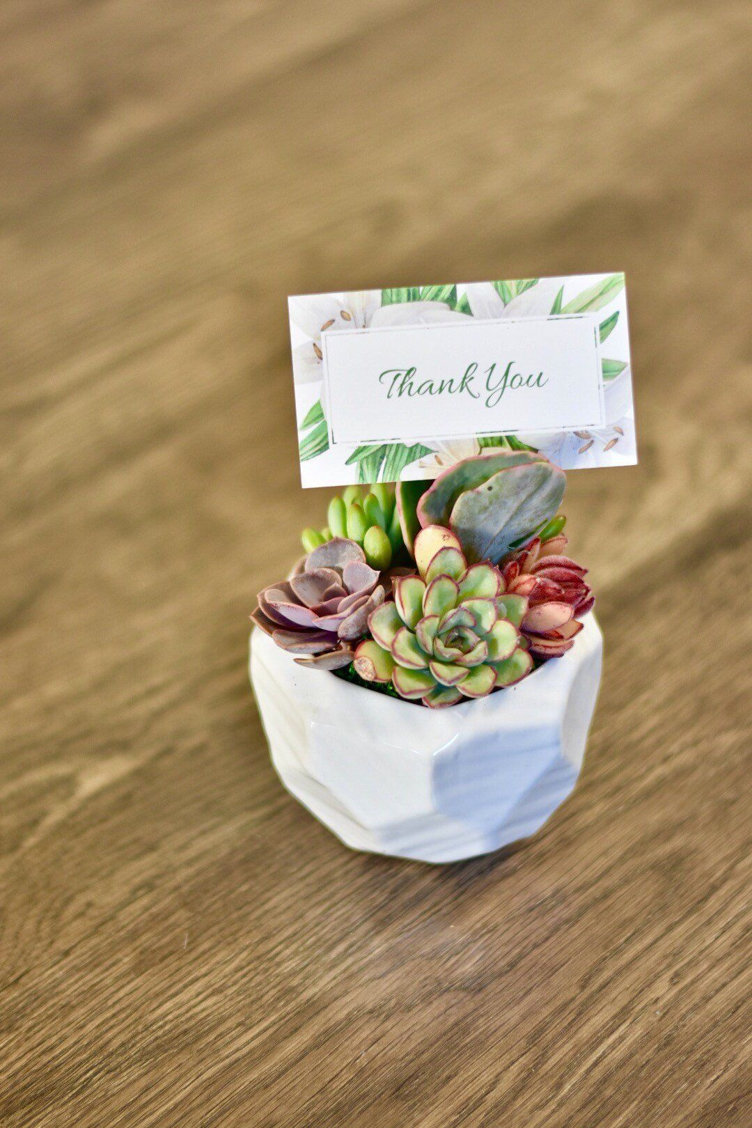 Excited To Share This Item From My Etsy Shop Succulent Gift For Office Succulents Sympathy Friend Birthday Teacher Thank You
