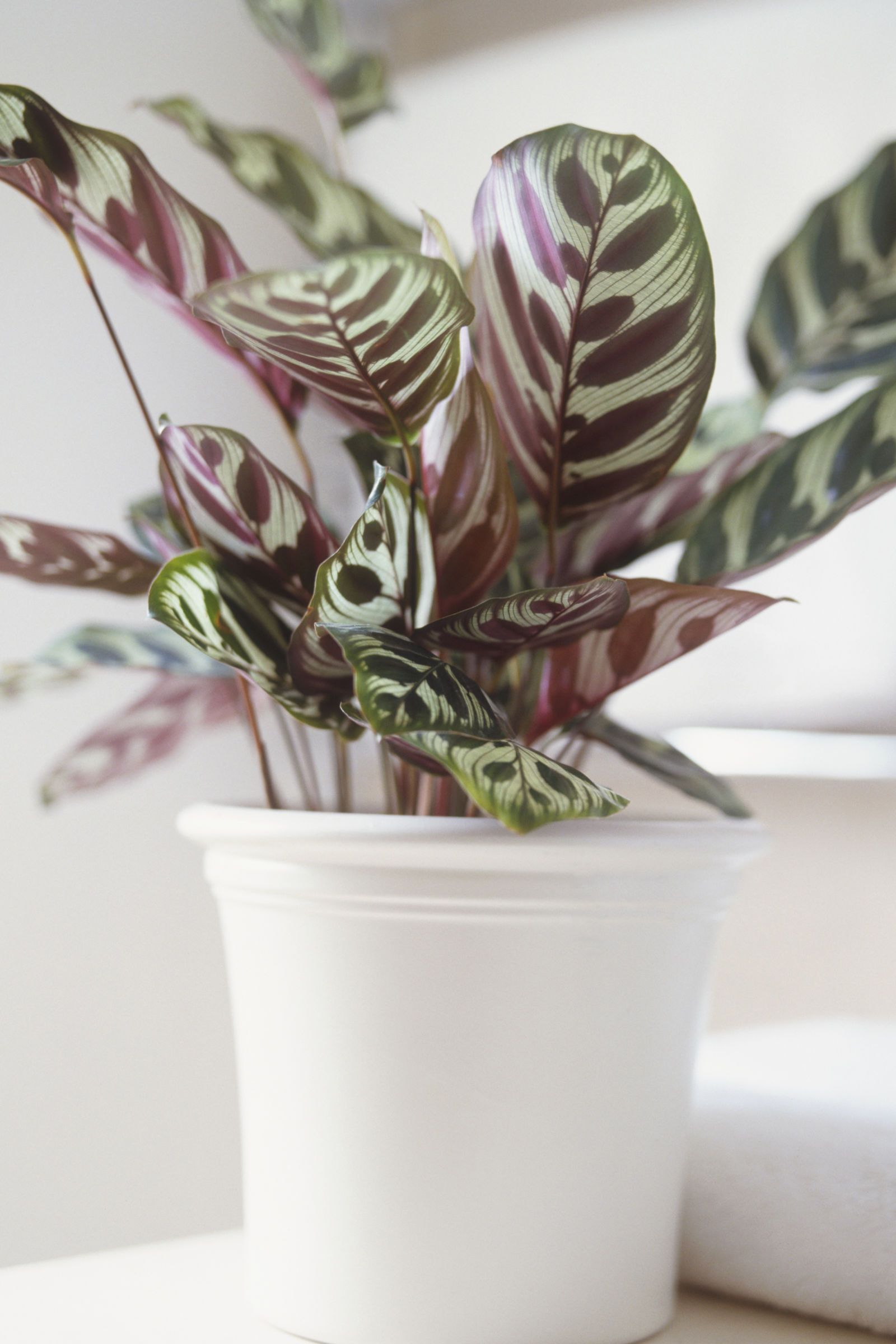 The indoor plants you canut kill plants gardens and garden