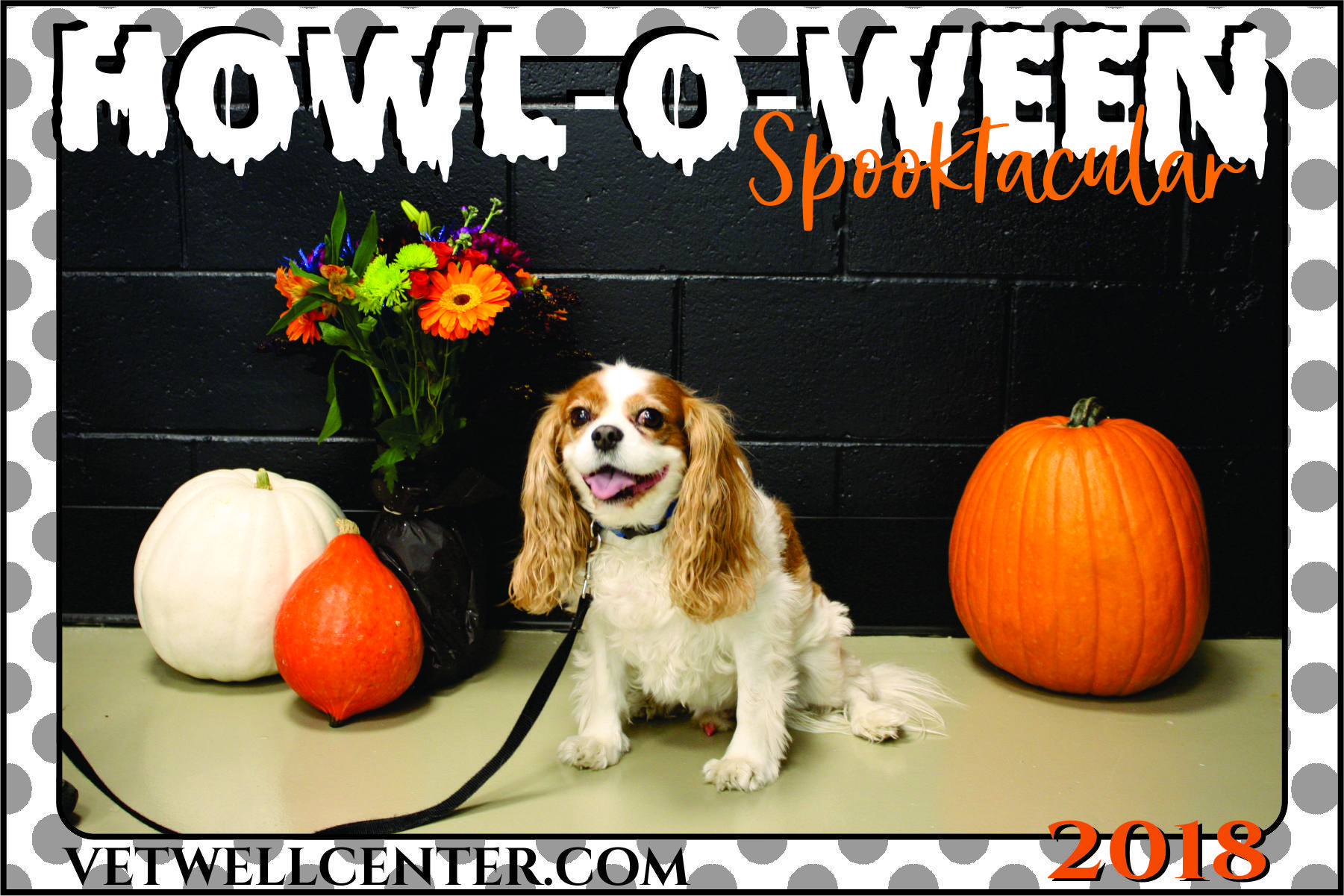 HowlOWeen Spooktacular Pet Photos! Veterinary Wellness