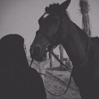 صور خيول رمزيات خيول جميلة خلفيات خيول 2016 Horse Girl Photography Horses Girly Pictures