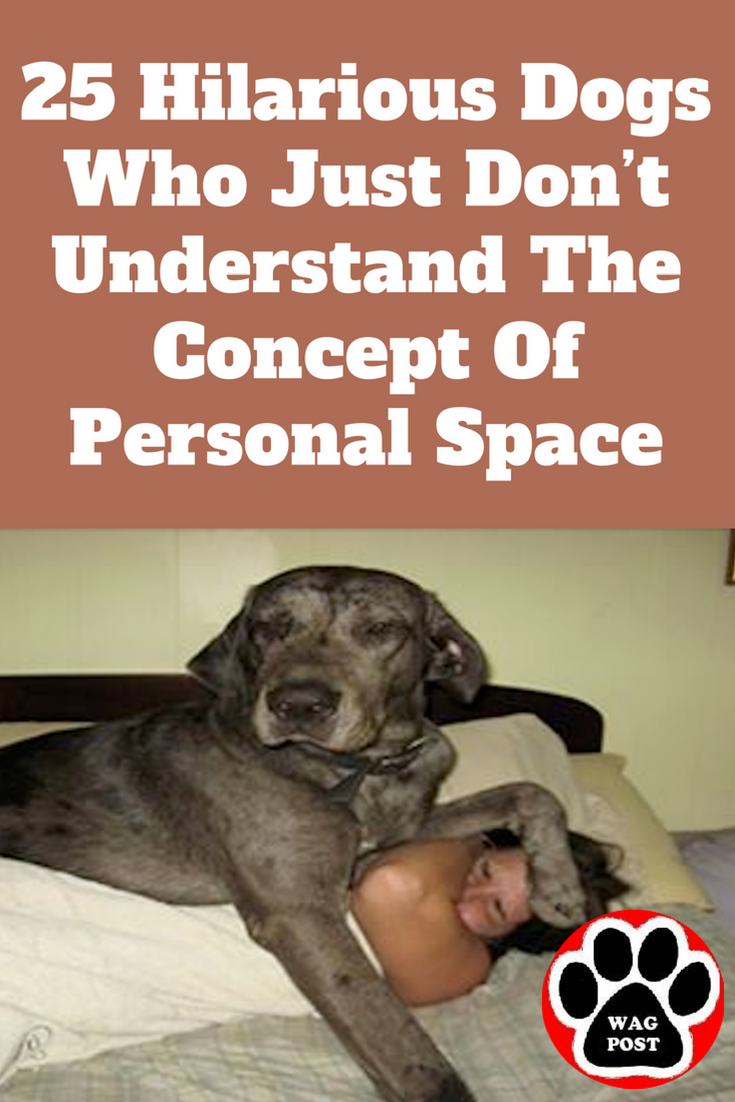 25 Hilarious Dogs Who Just Don T Understand The Concept Of Personal Space Funny Dog Memes Funny Dog Pictures Dogs