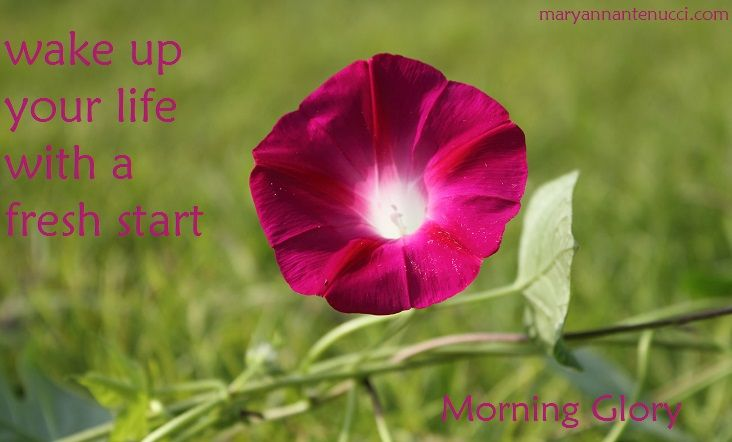 Morning Glory Essences Wakes Up Our Lives Giving Us A Fresh Start This Essence Is For Those Times When We Mig Wonderful Flowers Flowers Morning Glory Flowers