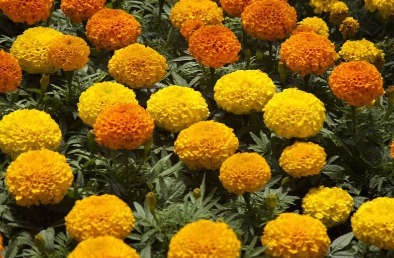 Blog Plantas Resistentes Al Calor Gardening Pinterest - Plantas-de-jardin-resistentes