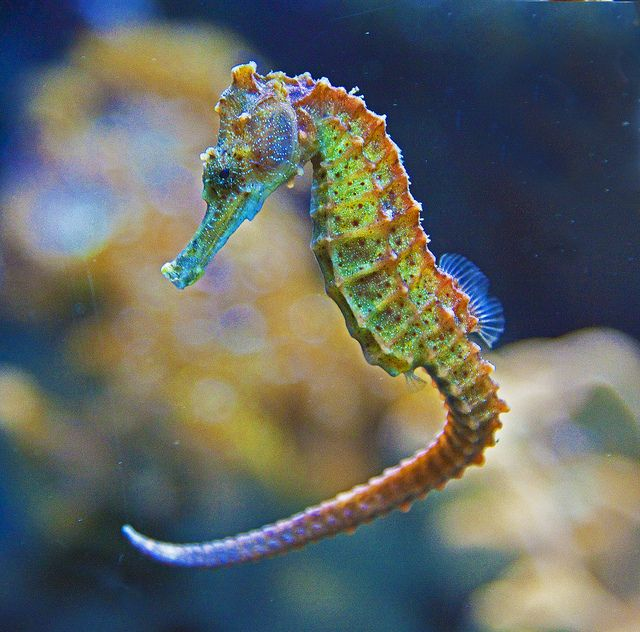 A Horse Of A Different Color Seahorse Ocean Creatures Colorful Seahorse