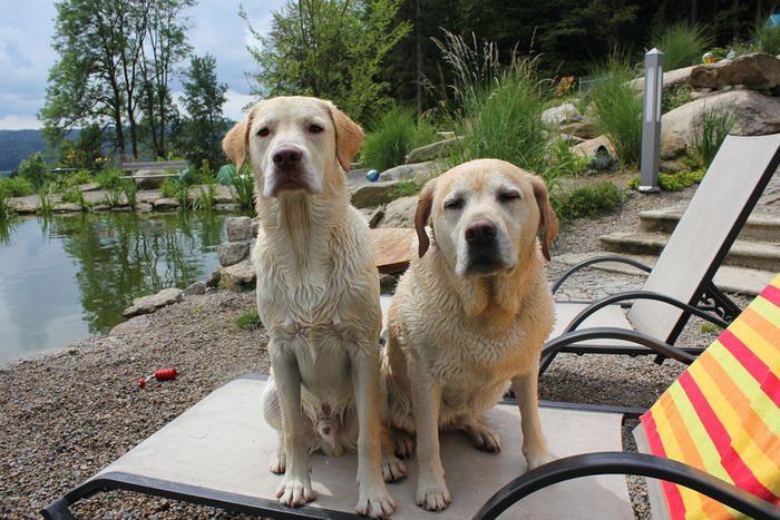 Natur Hotel Bergfried Im Bayerischen Wald Hund Reisen Urlaub Mit Hund Urlaub Im Bayerischen Wald