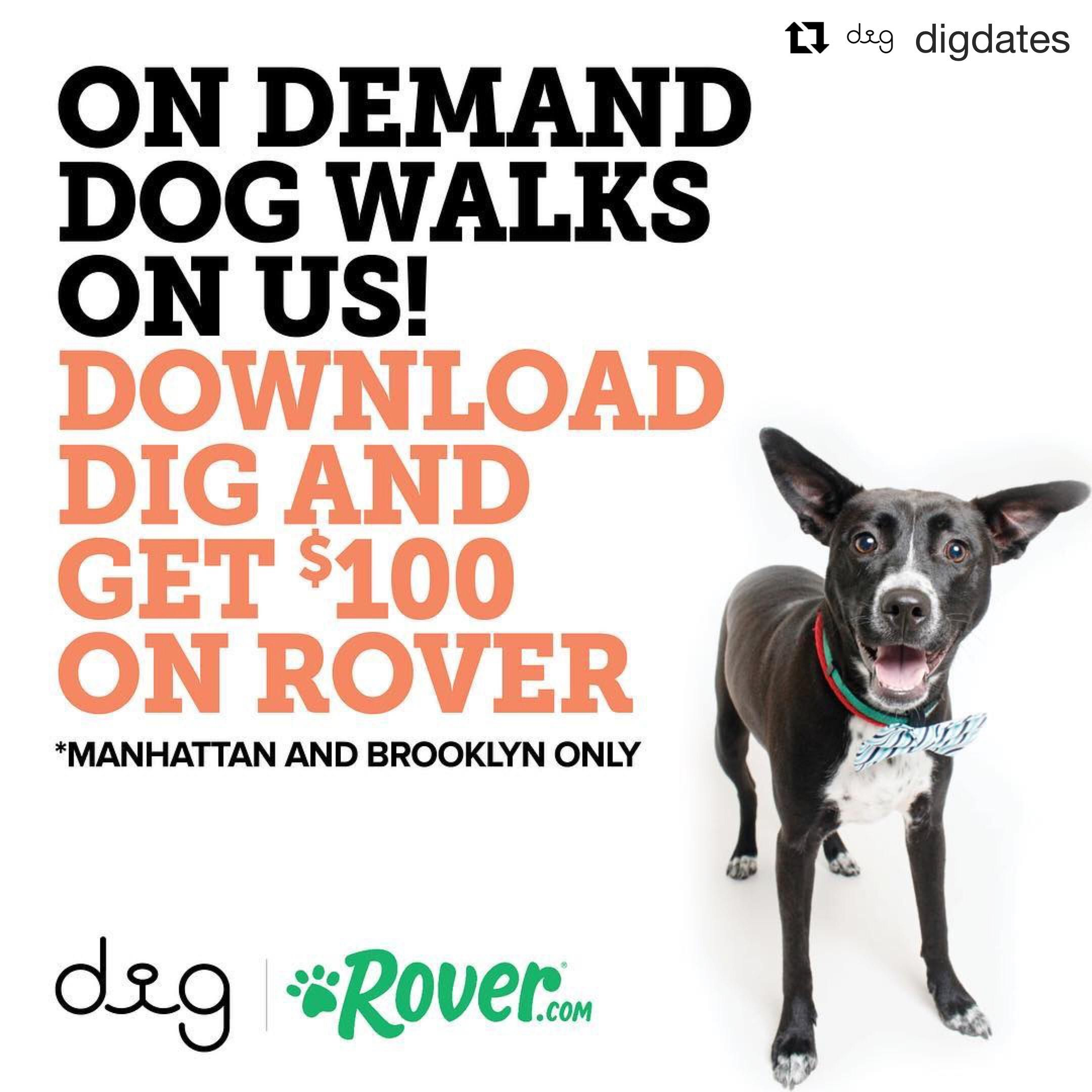 Dig The Dog Person S Dating App And Rover Have Teamed Up To Give