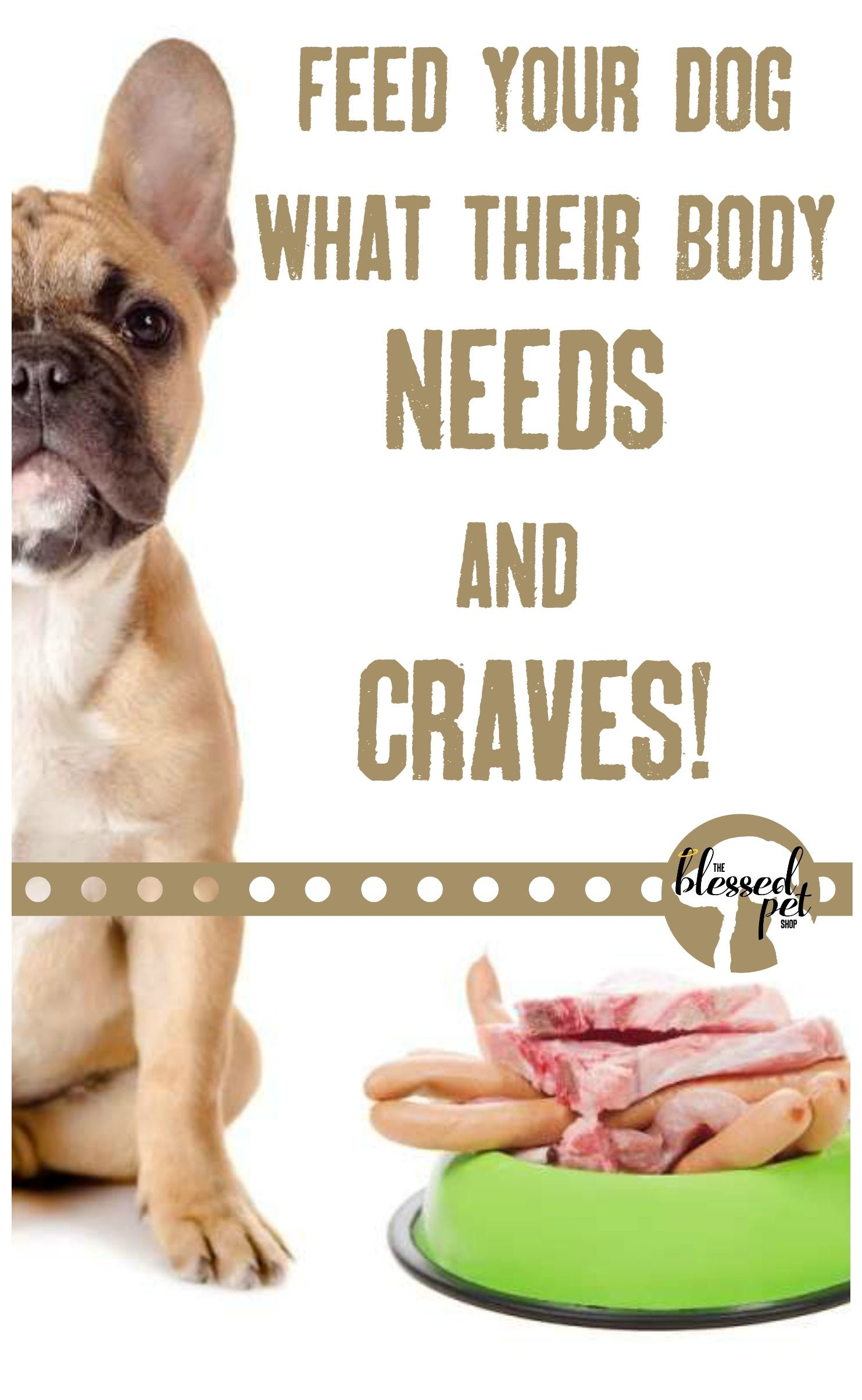Dogs & Cats are CARNIVORES. Feed them RAW DIETS. The