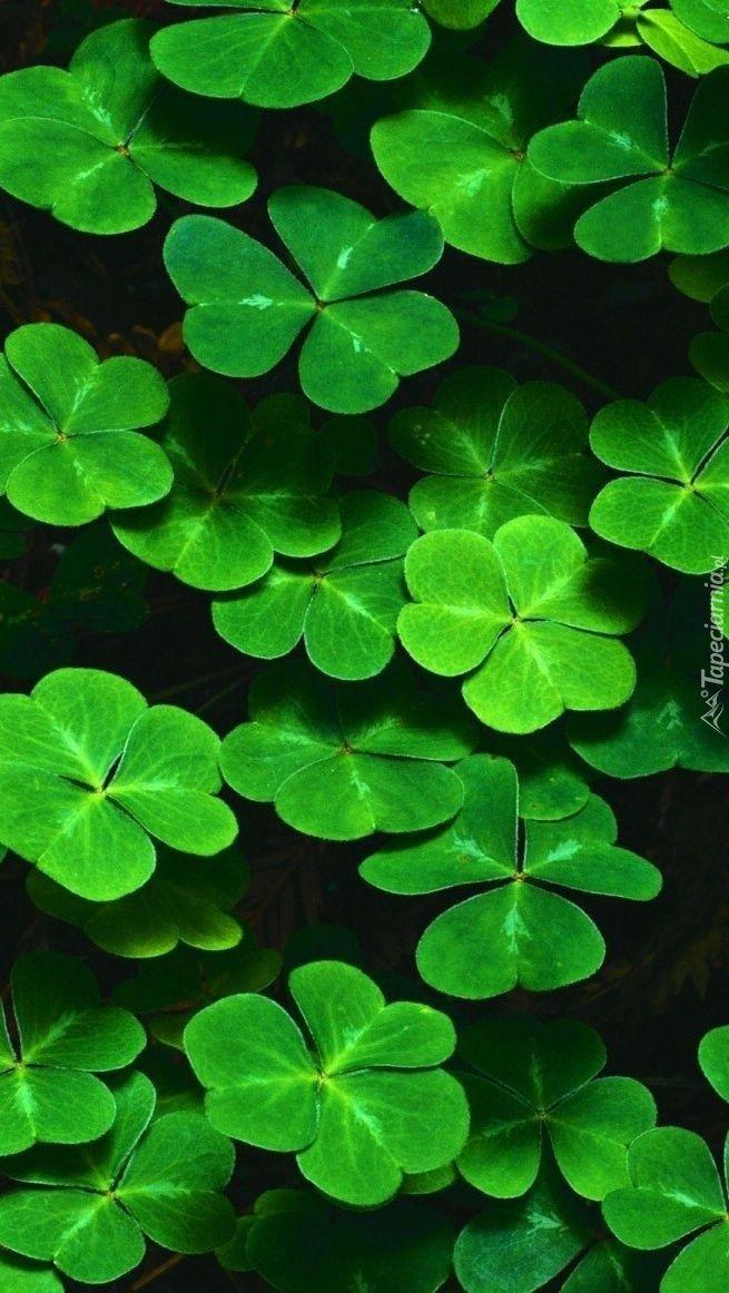 Green Grun Verde Gron Groen Ç·' Colour Pattern Green Zelenyj Color Rckeyru Nature Iphone Wallpaper Flower Background Iphone Iphone Background