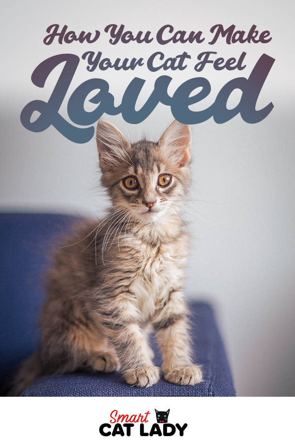 Don't know how to express yourself to your cat? Check out our tips on how to make your cat feel loved and safe.    #smartcatlady #cat #kitty #kitten #pet #owner #catlover #loved #safe #loving