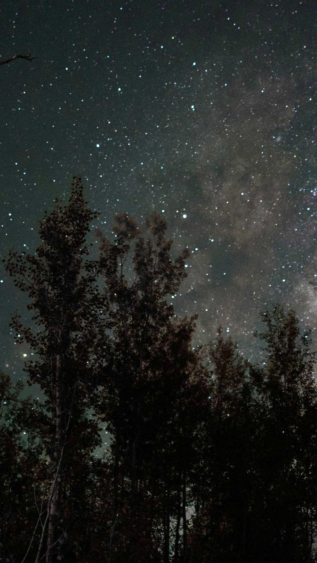 Iphone Wallpaper Starry sky stars trees night wallpaper