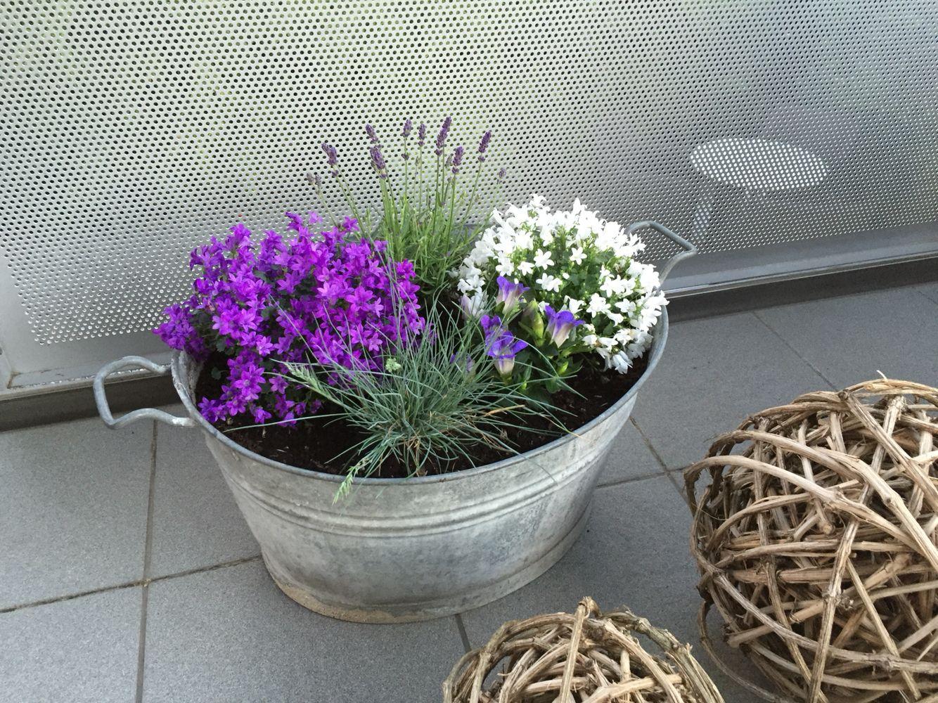 sommer bepflanzung balkon balkon und hauseingang ideen blumenkasten balkon. Black Bedroom Furniture Sets. Home Design Ideas