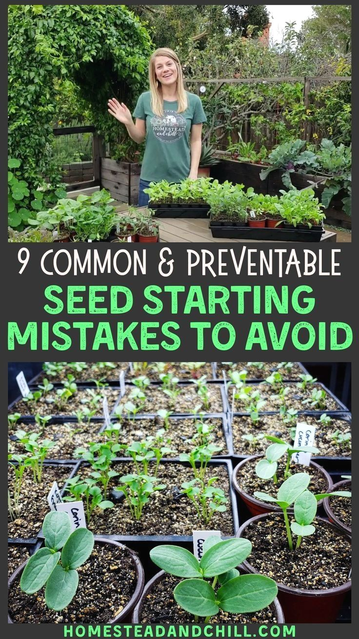 9 Common Seed Starting Mistakes To Avoid Homestead And Chill In 2020 Seed Starting Garden Seeds Growing Vegetables