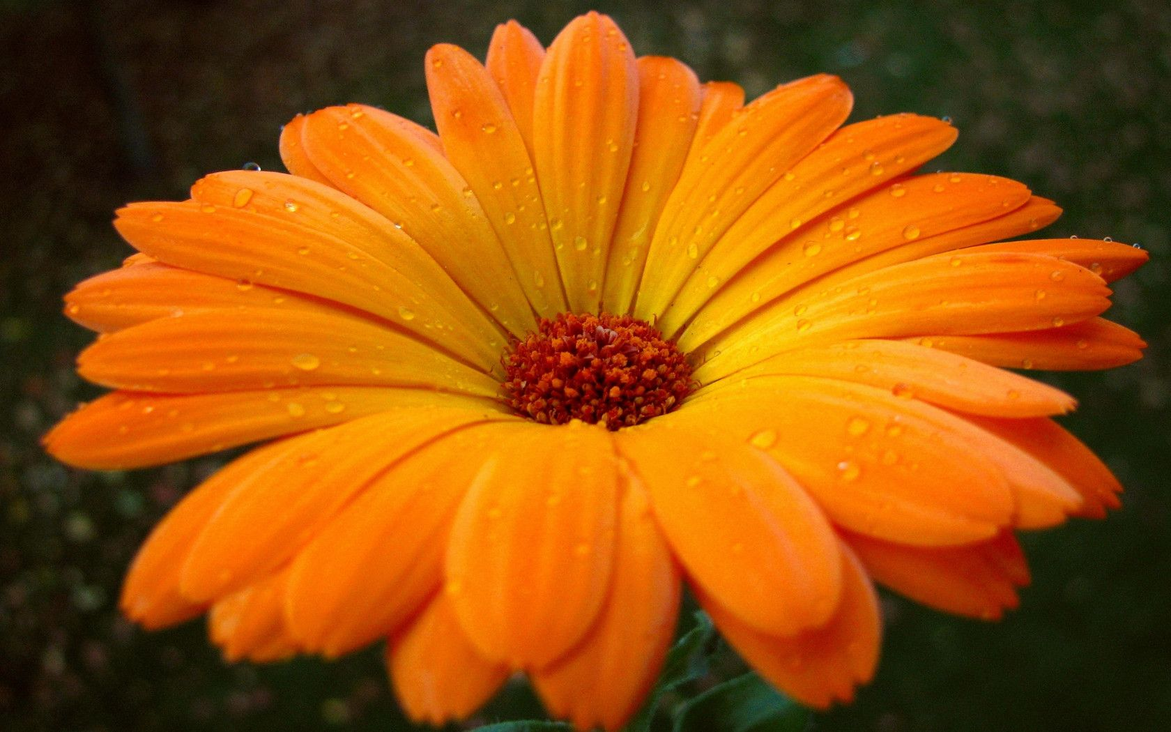 Find This Pin And More On Orange Flowers