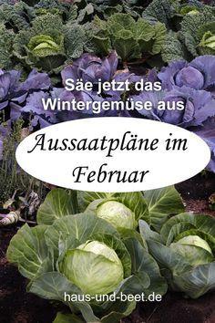 Aussaatpläne im Februar - Bald geht es richtig los #wintergardening