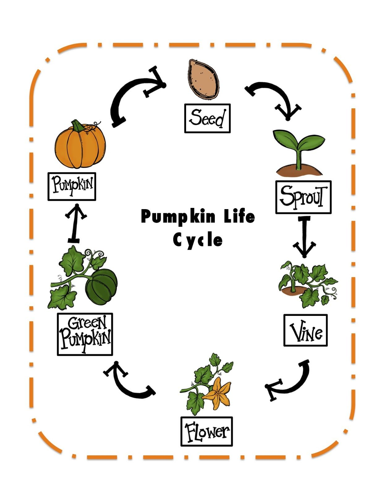 photograph regarding Life Cycle of a Pumpkin Printable named Pumpkin Daily life Cycle Printable ~ Preschool Printables