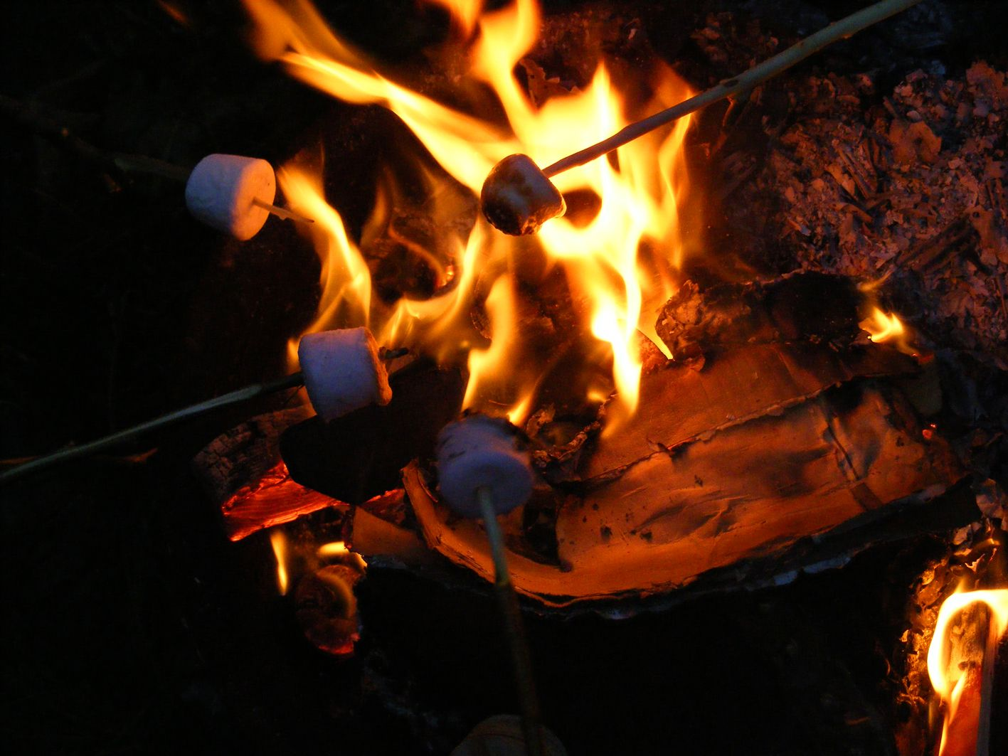 Image result for bonfire roasting marshmallows photos