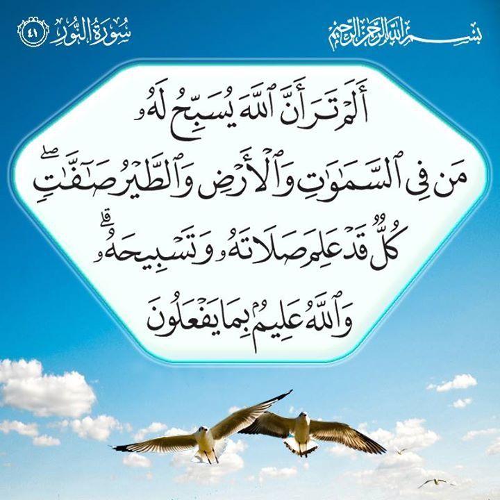 أ ل م ت ر أ ن الل ه ي س ب ح ل ه م ن ف ي الس م او ات و ال أ ر ض و الط ي ر ص اف ات ك ل ق د ع ل Quran Verses Prayer For The Day Noble Quran