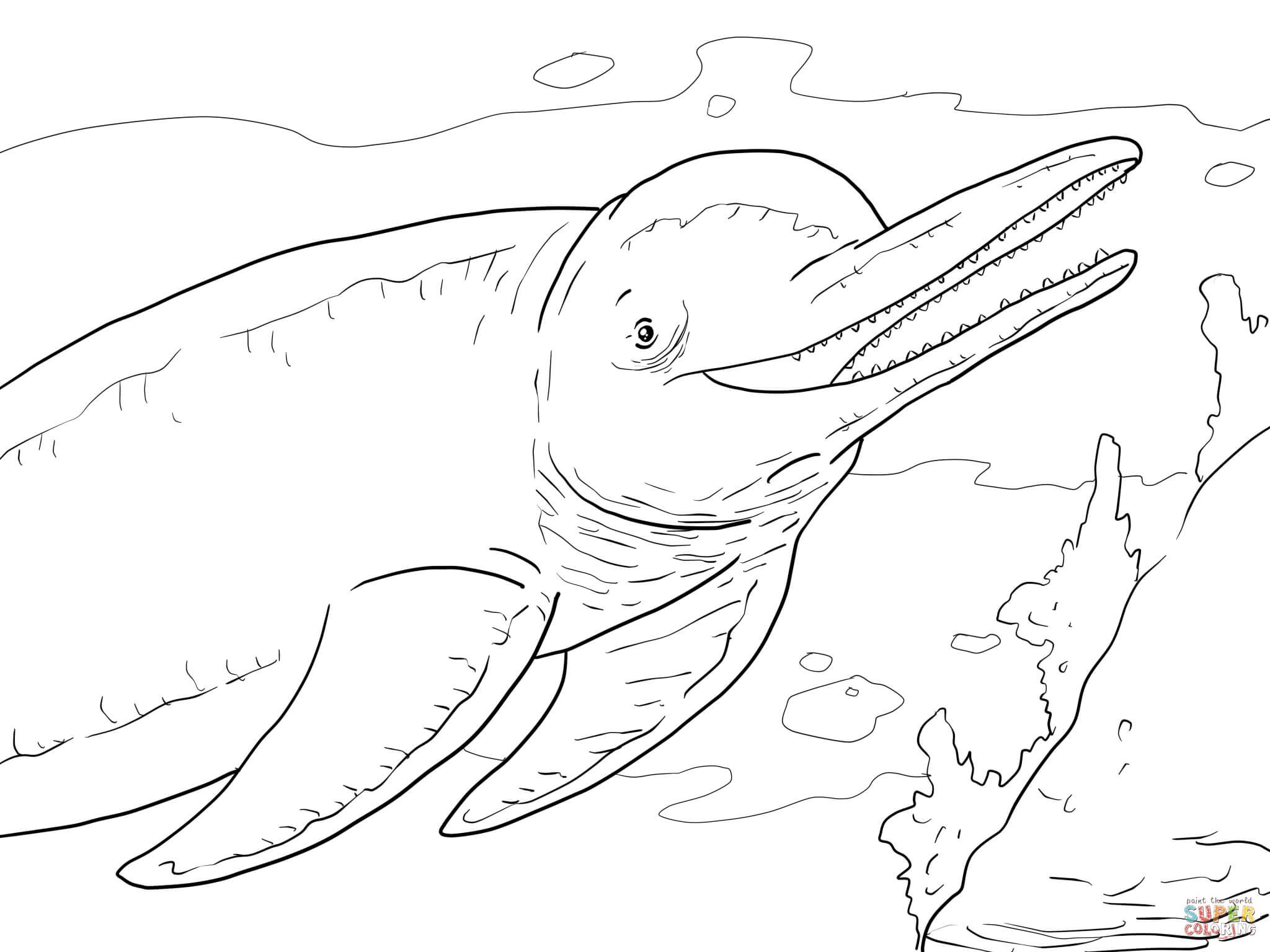 Amazon River Dolphin Boto Coloring Page From Dolphins Category