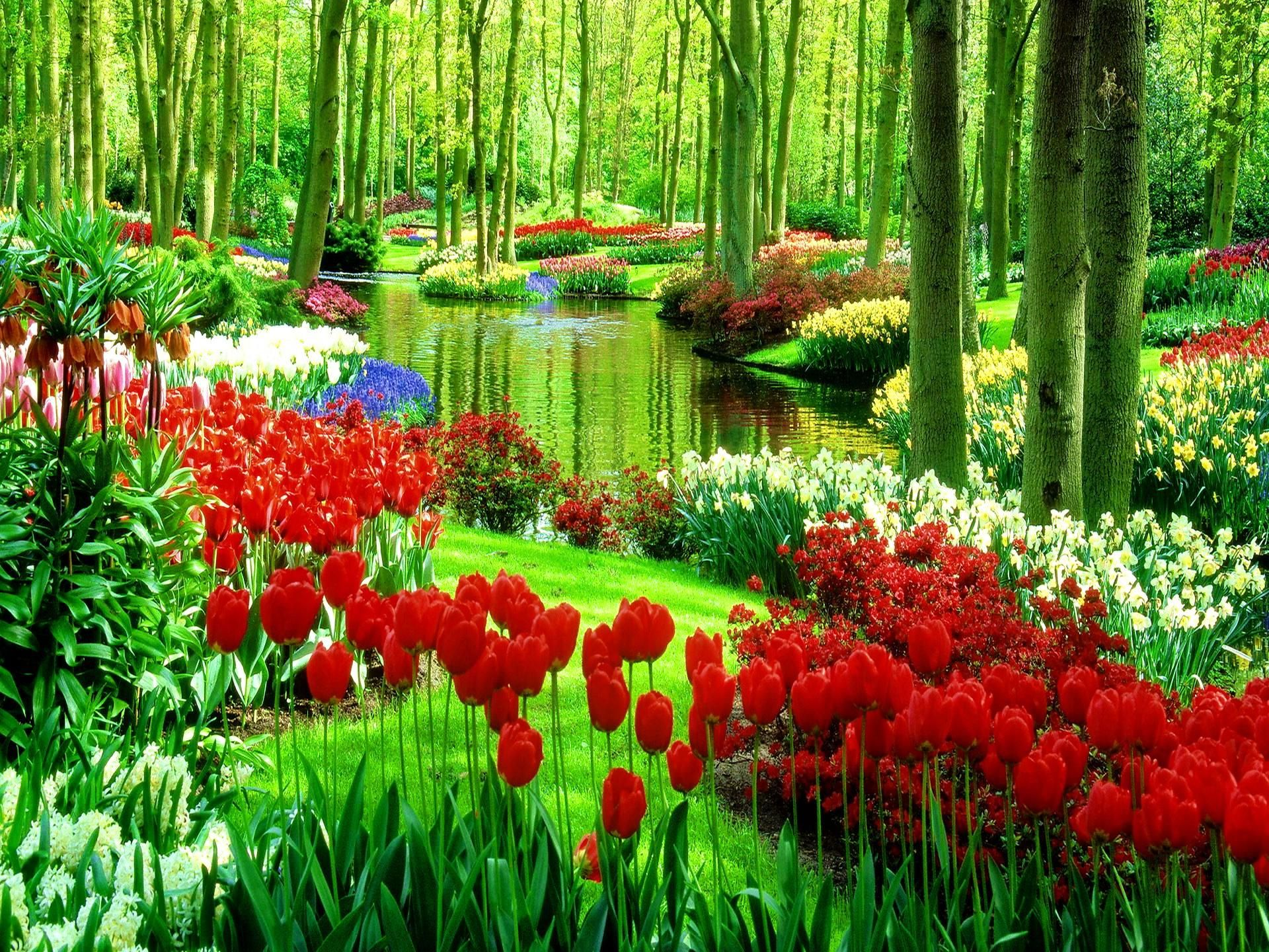 Green Park With Flowers Nature Full HD Wallpaper | Nature ...