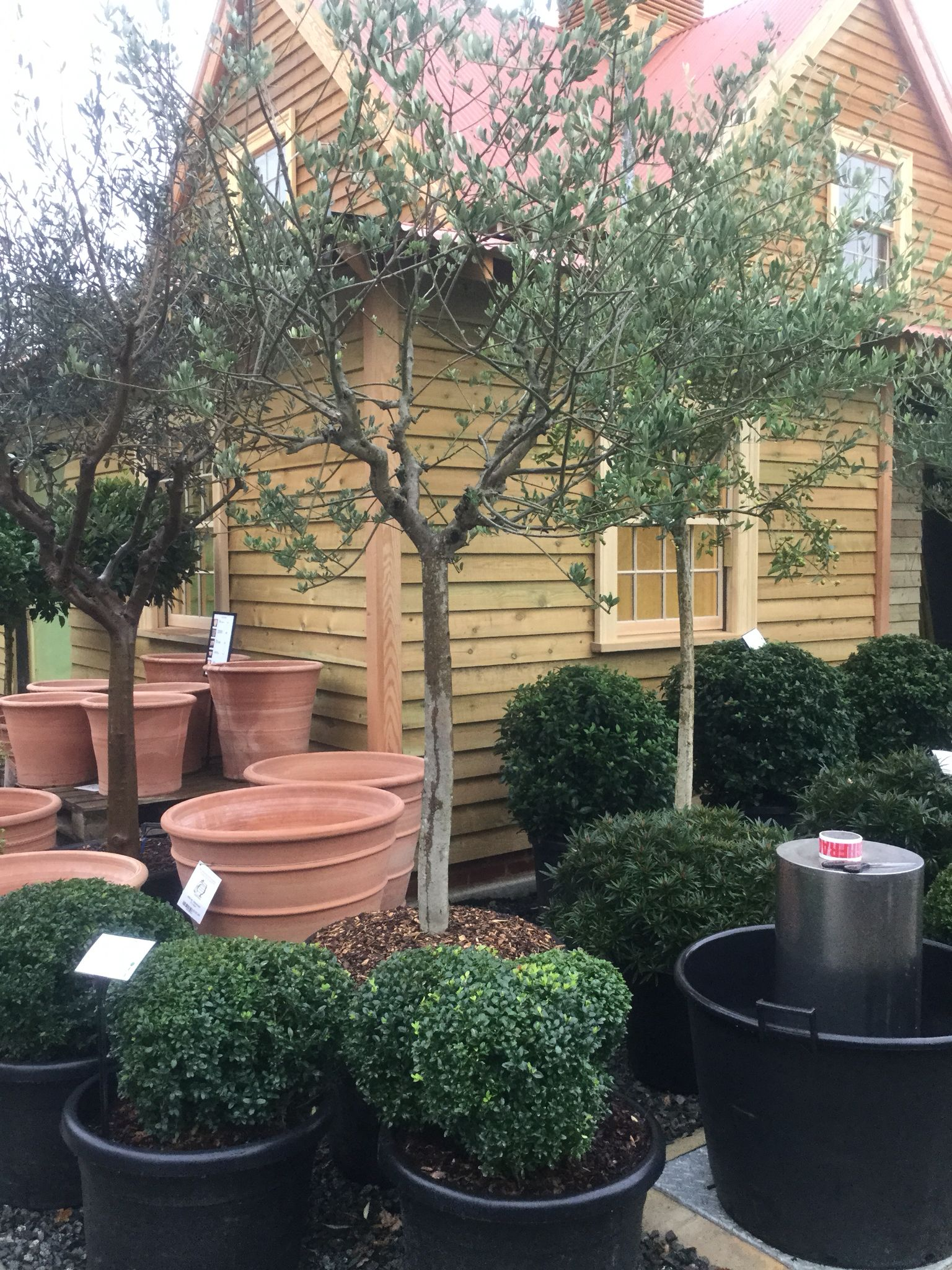 An Olive grove outside our office (With images) Plants