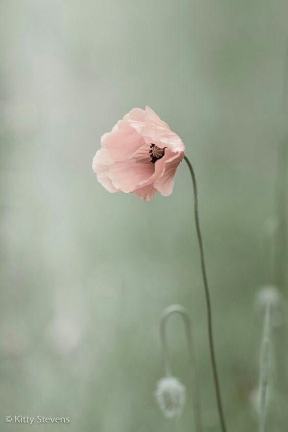 Spring Whisper Fotos Con Flores Flores Exoticas Flores Bonitas