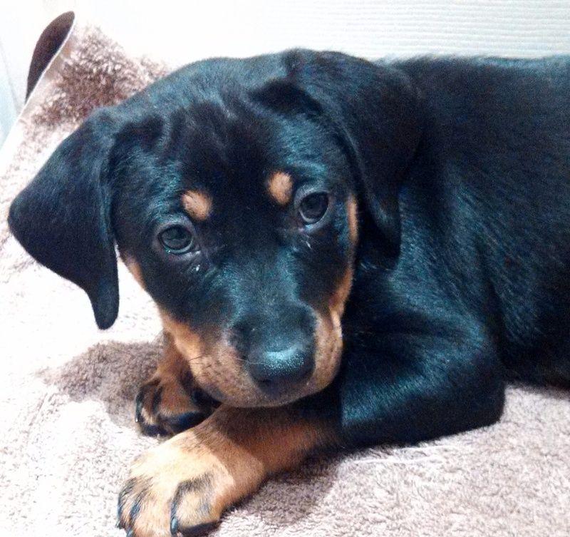 Adopt Blitzen on Adoption, Animal rescue, Animals