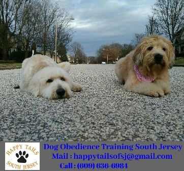 Dog Obedience Training In Marlton Dogs Dog Training Pet Dogs