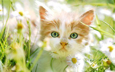 Download wallpapers ginger kitten, little cute kitten