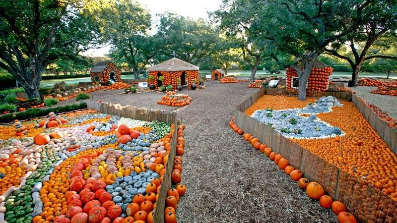 Dallas arboretum pumpkin patch named one of the best - Botanic gardens pumpkin festival ...