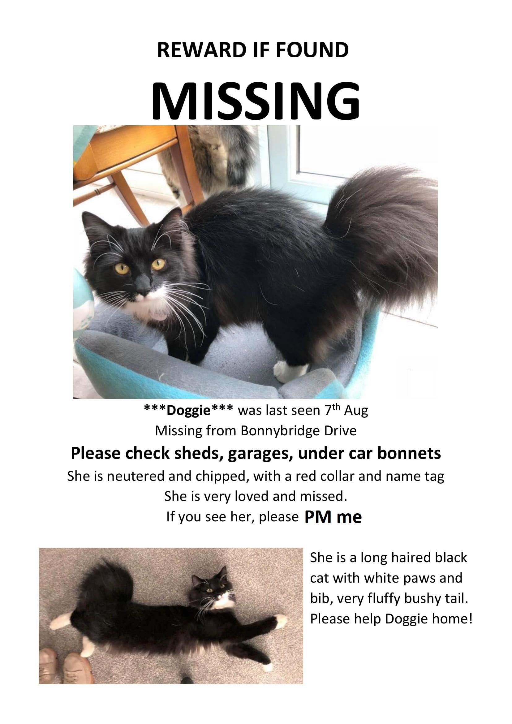 Lost Our Cat Please Keep an Eye out Folks [She's from