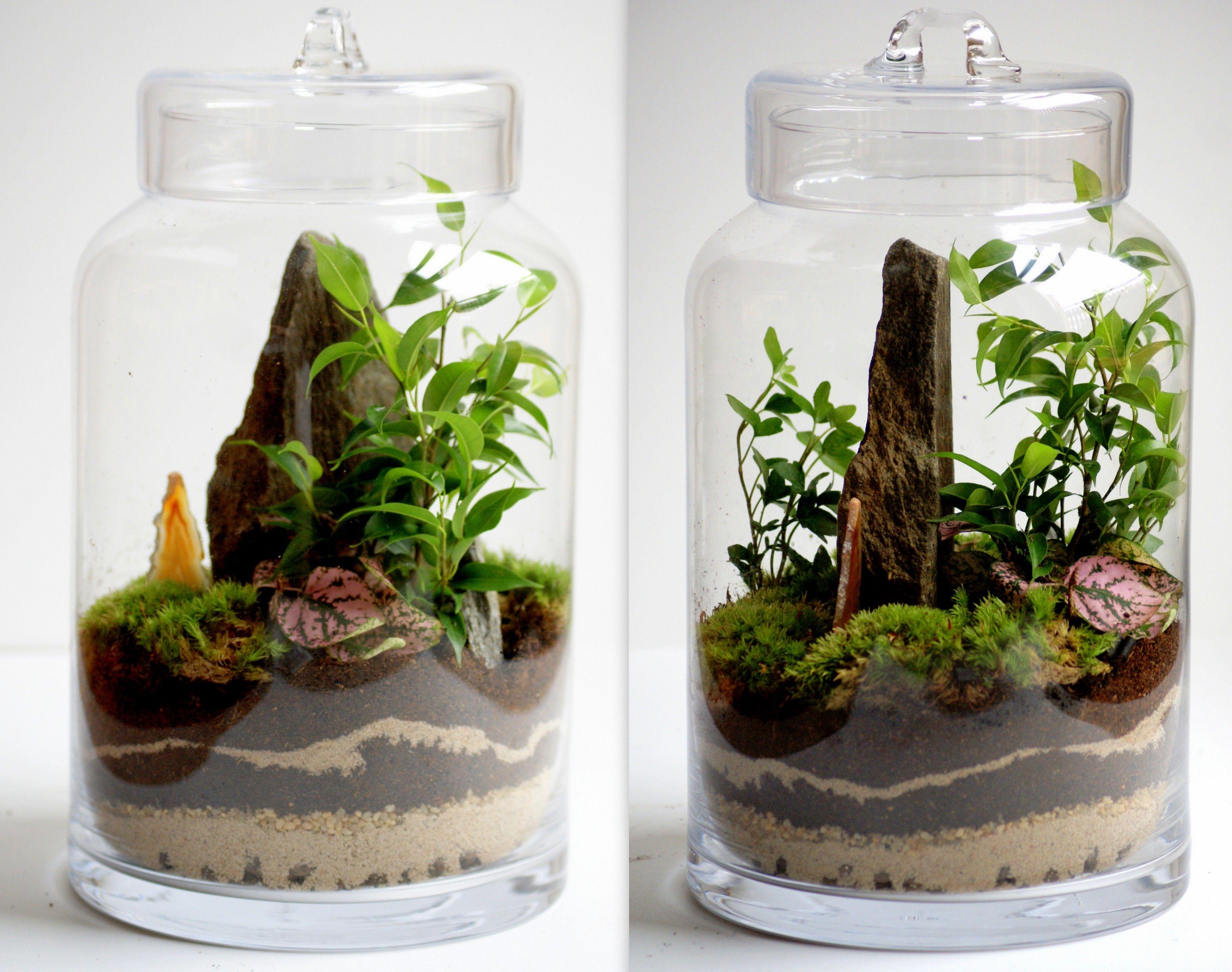 Lesny Sloik Unikat Las W Sloiku Forest Jar Garden Terrarium Cactus Terrarium Moss Terrarium