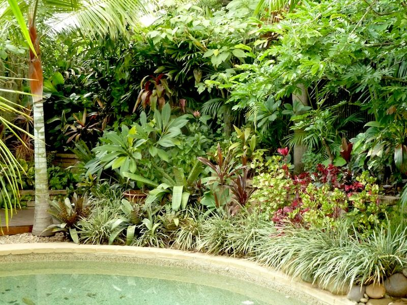 Temperate climate tropical garden gardendrum tropical for Tropical garden designs