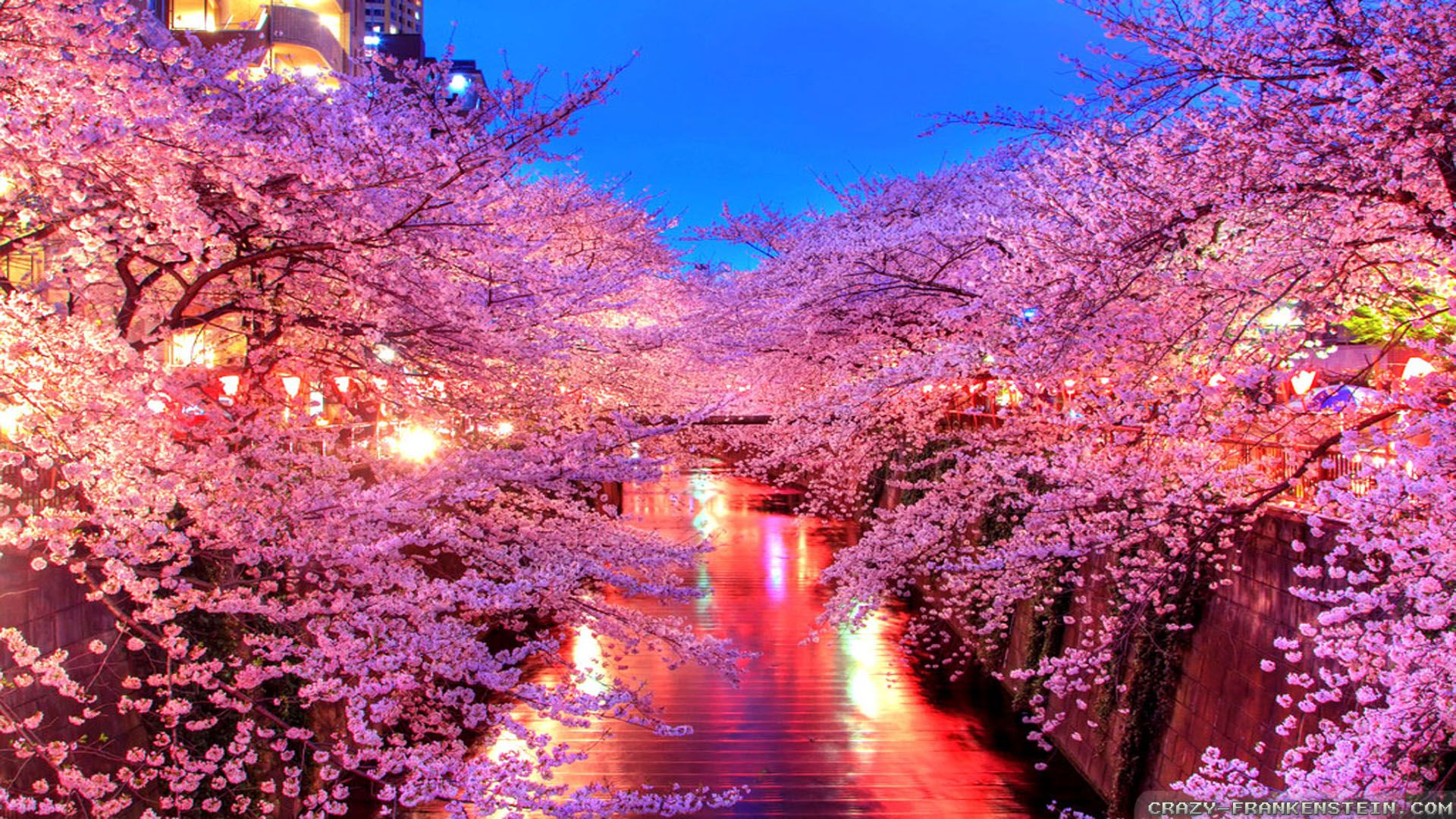 Spring Night Japan Spring Wallpaper Hd Phone Wallpapers Cherry Blossom Wallpaper Cherry Blossom Japan Cherry Blossom Background