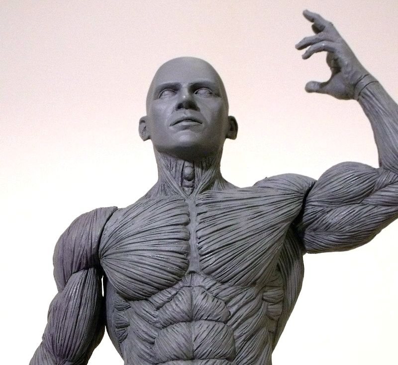 REVIEW: Artist\'s Anatomy Male Anatomy Model | Anatomy | Pinterest ...