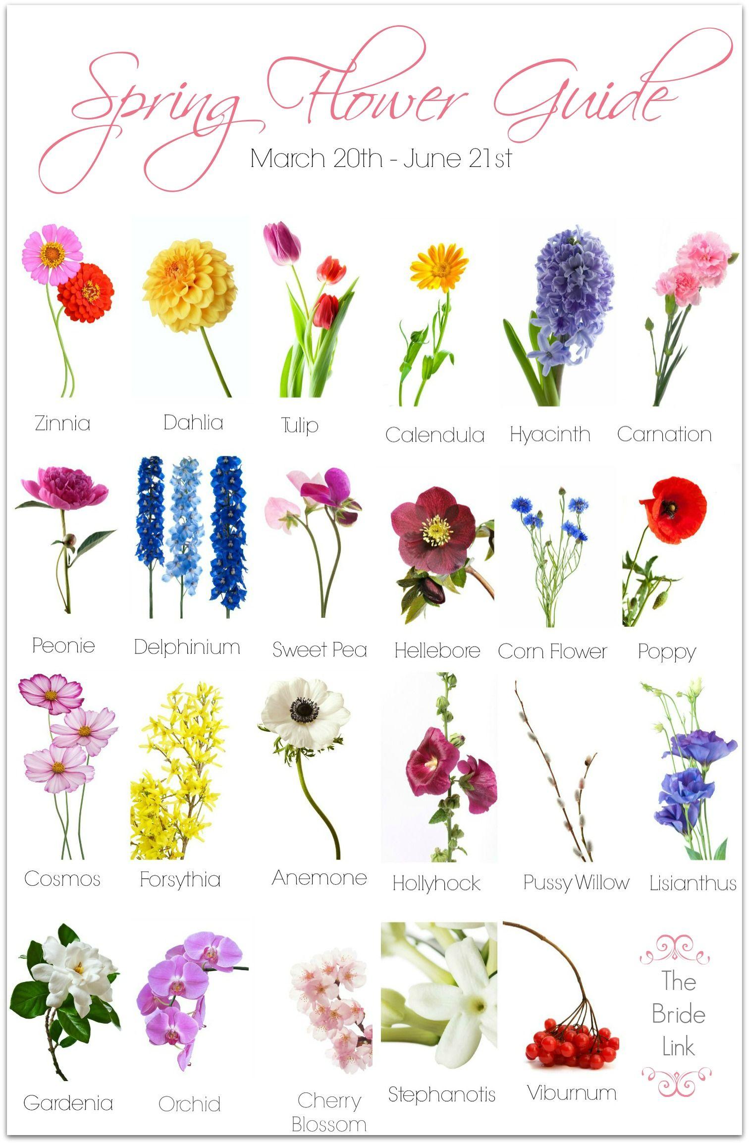 Spring Wedding Flower Guide Wedding flower guide, Spring
