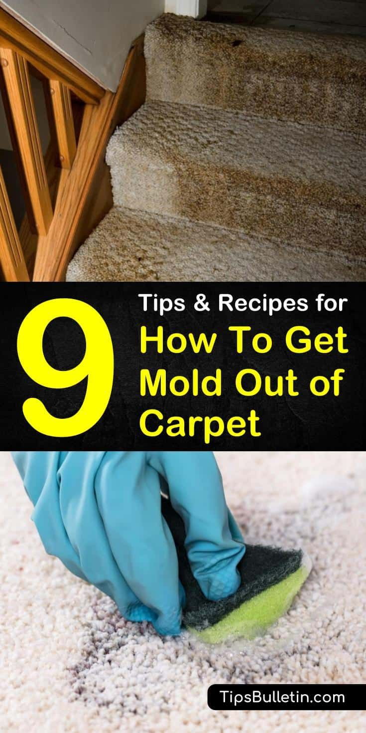 9 amazing ways to get mold out of carpet house cleaning